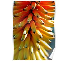 Spanish flower in yellowish colours Poster