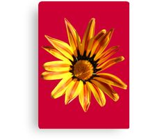 Yellow Daisy on Red Canvas Print