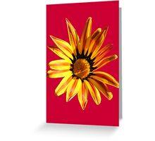 Yellow Daisy on Red Greeting Card