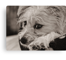 Oh I wish Gus would play with me Canvas Print