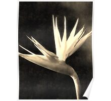 Cut Bird of Paradise Flowers 3 Antiqued Poster