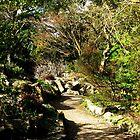 Botanic Gardens Dublin by heartyart