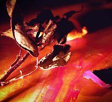 Flower in the Dark by Maliha Rao