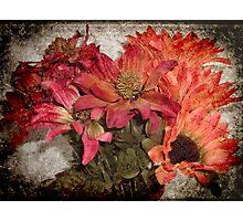 Petals © Photographic Print