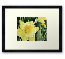 Daffodil in the Sunshine Framed Print