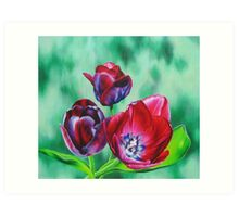 Wine-colored Tulips Art Print