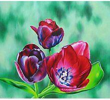 Wine-colored Tulips Photographic Print