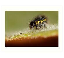 Calvin Caterpillar Art Print