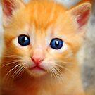 the Golden Kitty by carlosporto