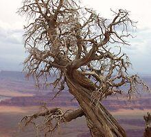 Utah Overlook by Dawn Parker