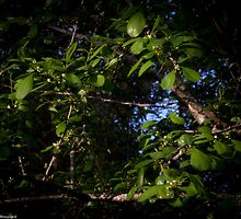 The Perfect Shade of Green by LauraBroussard