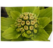 Grouped bundles of little green-white flowers... Poster