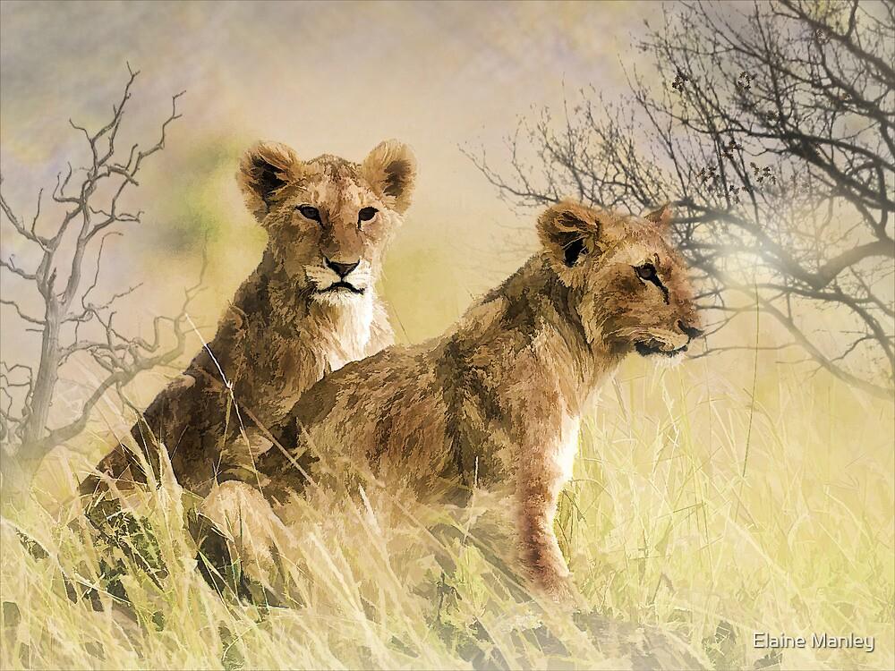Savanagh by Elaine  Manley