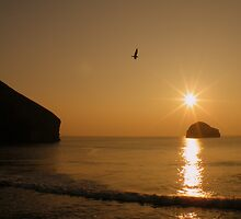 Cornwall: The Gull & Gull Rock by Rob Parsons