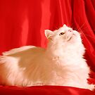 White cat red silk. by Annbjørg  Næss