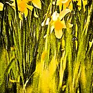 Escot Daffodils, Dancing in the Park.. by Mike  Waldron