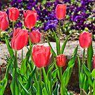 Spring Colors by Gregory Ballos | gregoryballosphoto.com