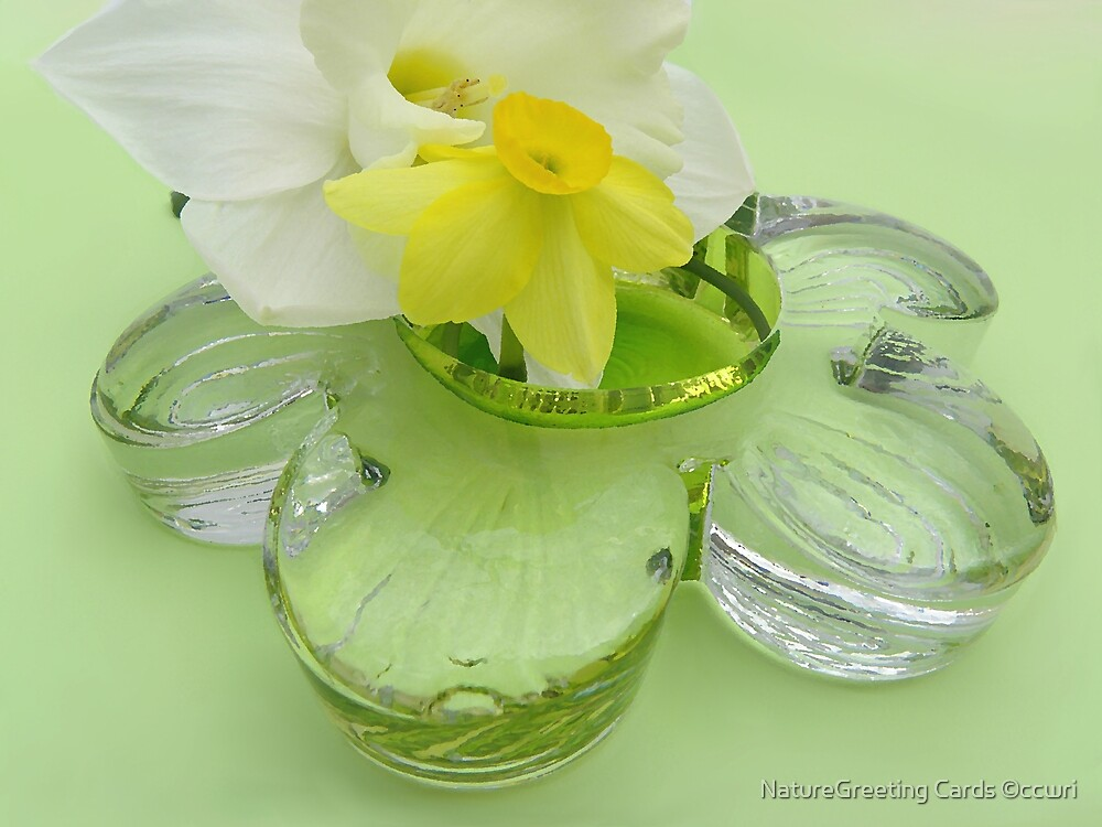 Daffodils, and Glass Daisy  by NatureGreeting Cards ©ccwri