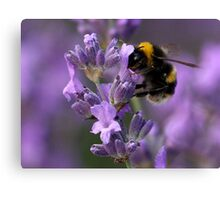 Busy Bee! Canvas Print