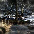 snowy Oregon forest , Fox Creek 2 by Dawna Morton