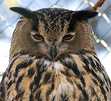 The Disinterested Owl by SunDwn