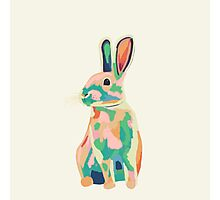 Colourful rabbit, bunny Photographic Print