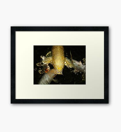 GOLDIE AND THE BUBBLE MACHINE Framed Print