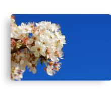 Blossom On The Plum Tree Canvas Print