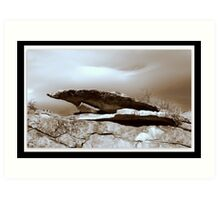 Wyoming Rock Shelter  Art Print