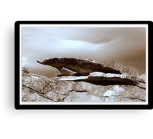 Wyoming Rock Shelter  Canvas Print
