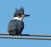 Fisher on a Wire by lorilee