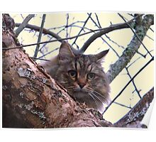Oatmeal...Woods cat Poster