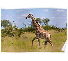 Walking Through Africa Poster