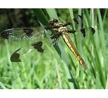 The Wings of a Dragonfly Photographic Print