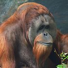 Orangutan by carpenter777