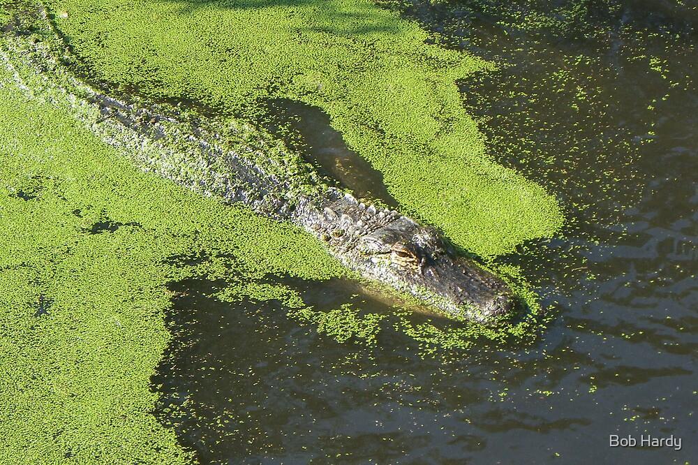 Gator by Bob Hardy