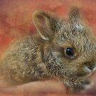 Snowshoe Hare by kayzsqrlz