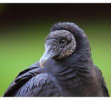 Black Vulture Photographic Print