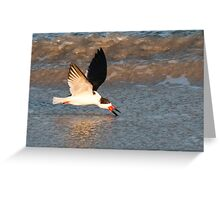 Skimmer skimming the water at Cape Canaveral, Florida Greeting Card