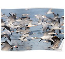 """Flying Wings"" - shore birds flying Poster"