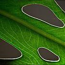 Leaf geometry by Celeste Mookherjee