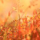 Hazy days of summer / Somer by Antionette