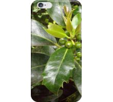 Holly Berries and Leaves iPhone Case/Skin