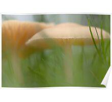 Mushroom jungle Poster