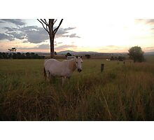 Beaudesert rural scene Photographic Print