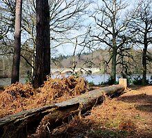 Virginia Water: Windsor Great Park, UK. by DonDavisUK
