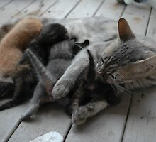 Cute kittens feeding time by Ian McKenzie