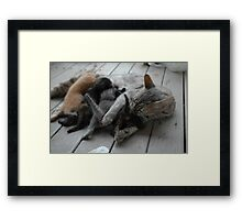 Cute kittens feeding time Framed Print