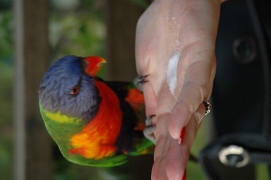 Australian parrots 3 by Ian McKenzie