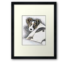 Jack Russell Terrier Puppy Framed Print